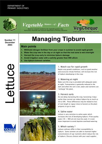 No.11 download pdf 404kb - Vegetable Growers Association of ...