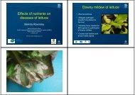 Effects of nutrients on diseases of lettuce Downy mildew of lettuce