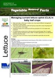 No. 39 download pdf 152kb - Vegetable Growers Association of ...