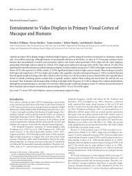 Entrainment to Video Displays in Primary Visual Cortex of Macaque ...