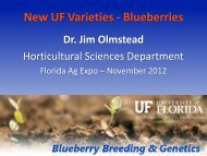New UF Varieties - Blueberries - Florida Ag Expo