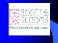 Re-blooming Bearded Irises - Gloucester County Virginia
