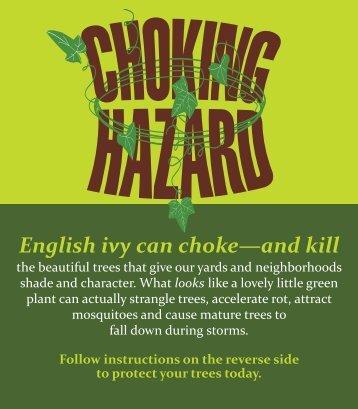 English Ivy - A Choking Hazard