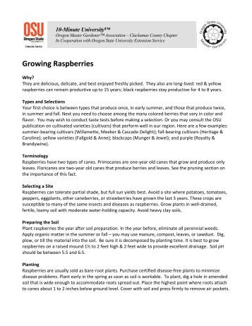 Growing Raspberries - Metro Master Gardeners