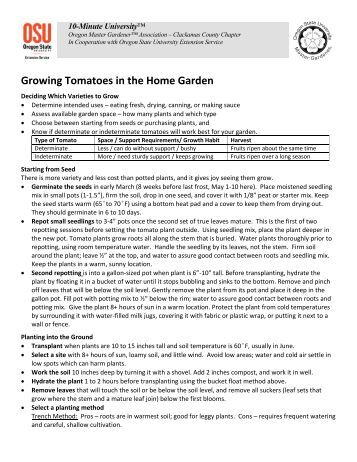 Growing Tomatoes - Metro Master Gardeners
