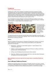 Chalkbrood - Blackburn and East Lancashire Beekeepers' Association