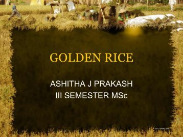 Golden Rice 2 - (CUSAT) – Plant Biotechnology laboratory