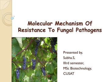 Multistate Outbreak of Fungal Meningitis and Other Infections –Resources for Clinicians