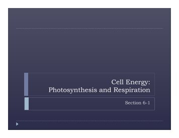 Cell Energy: Photosynthesis and Respiration