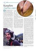Karpfen in Winterruhe - BLTV - Seite 2