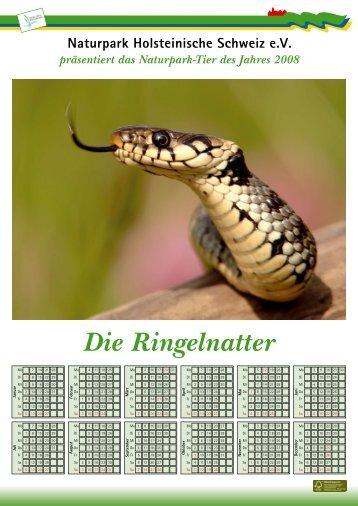 D ie R ingelnatter  (N atrix natrix) - Naturpark Holsteinische Schweiz