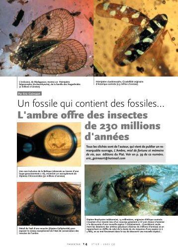Un fossile qui contient des fossiles... - Ambre jaune