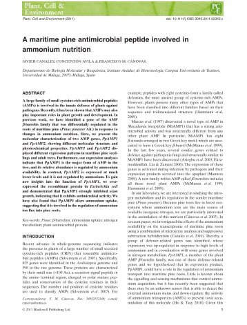 A maritime pine antimicrobial peptide involved in ... - ResearchGate