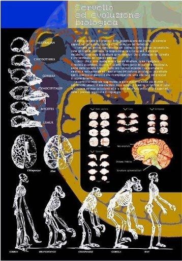 Cervello ed evoluzione biologica