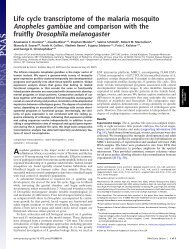 Life cycle transcriptome of the malaria mosquito Anopheles gambiae ...