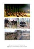 DRIVJAGT Ligetfalva 2013-14.pdf - Buhls Jagtrejser - Page 4