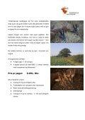 Bukkejagt England - Korsholm Jagtrejser - Page 2