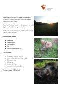 Bukkejagt i Polen 2010 - Korsholm Jagtrejser - Page 2