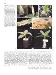 Rhizosecretion of recombinant proteins from plant hairy ... - Springer - Page 3