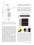 Auxin Biosynthesis by the YUCCA Genes in Rice - Plant Physiology - Page 3