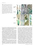 Auxin Biosynthesis by the YUCCA Genes in Rice - Plant Physiology - Page 7