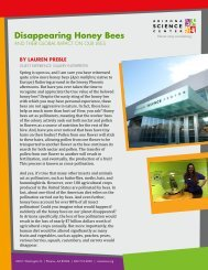 Disappearing Honey Bees - Arizona Science Center
