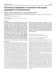 G2 histone methylation is required for the proper segregation of ...