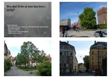 Hva skal til for at trær kan leve i en by? - FAGUS