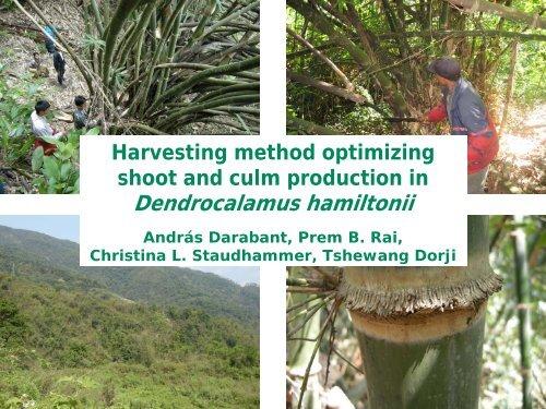 Darabant, Andras - World Bamboo