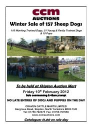 Winter Sale of 157 Sheep Dogs - CCM Auctions