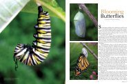 Blooming Butterflies - Michigan Home and Lifestyle