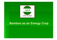 Bamboo as an Energy Crop - Eastern Cape Development Corporation