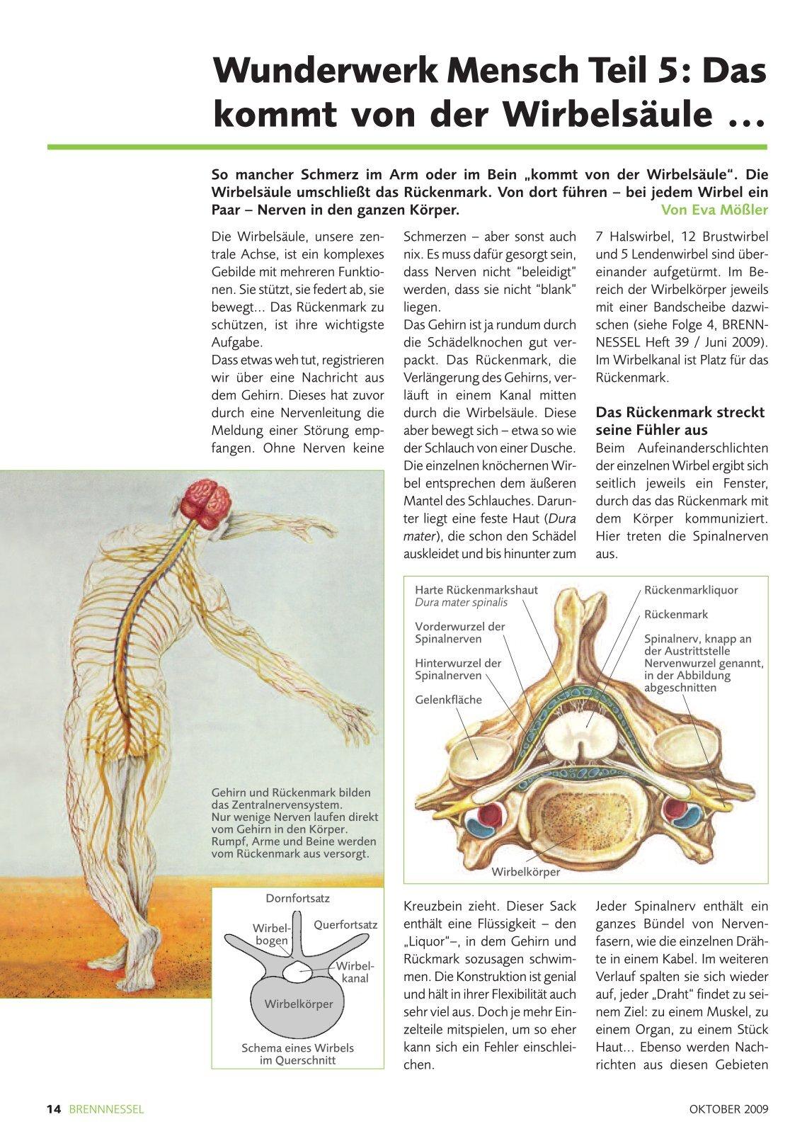 Groß Spinalnerven Anatomie Bilder - Physiologie Von Menschlichen ...