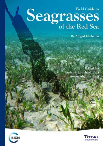 Field Guide to Seagrasses of the Red Sea - Seagrass-Watch
