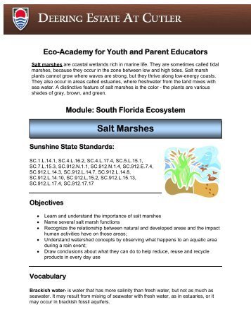 Salt Marsh Lesson Plan - Deering Estate at Cutler