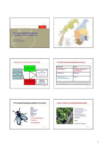 Alvorlige planteskadegjørere - hvordan hindre spredning ? - FAGUS