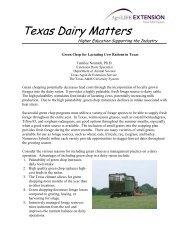 Green Chop for Lactating Cow Rations in Texas - Texas Dairy Matters