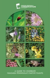 A Guide To Celebrate Niagara Peninusla's Native Plants