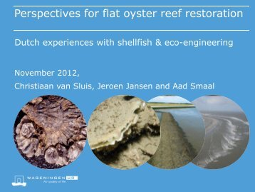 Perspectives for flat oyster reef restoration