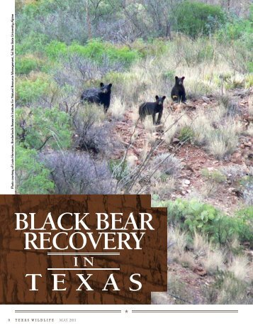BLACK BEAR RECOVERY - Wendee Holtcamp