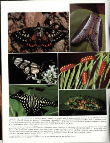 LEFT PAGE.- Fig. 1 - Association for Tropical Lepidoptera