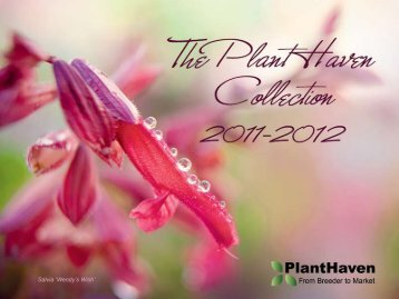Spring Trials Catalog - PlantHaven