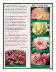 """""""Red"""" Collard - Pacific Rose Society - Page 2"""