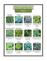 Green Lake Nursery Hostas