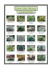 Green Lake Nursery Yuccas & Friends