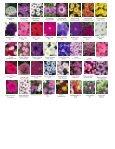 Dianthus Ideal Select Raspberry Euryops Sonnenschein Fuchsia ... - Page 2