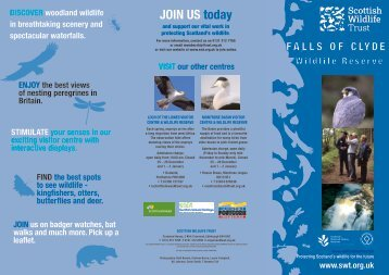 JOIN US today - Scottish Wildlife Trust
