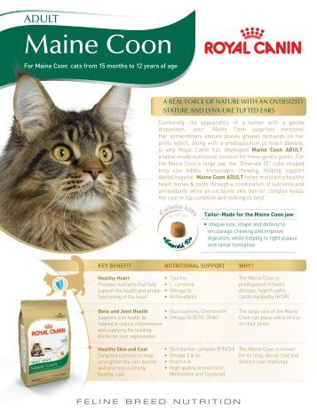 maine emblem cattery maine coon kittens. Black Bedroom Furniture Sets. Home Design Ideas
