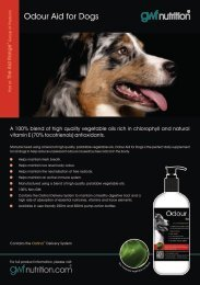 A5 Odour Aid for Dogs Flyer