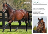2003, 16.1HH. Danewin – Staging (By Success ... - Vinery Stud